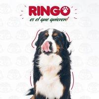 Alimento Perros Adultos Ringo Croqueta 30 Kg