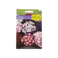 Semilla Flor Cineraria x0.033g