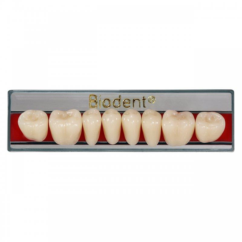 Biodent®  Dientes Posteriores Plaqueta x 8 Piezas